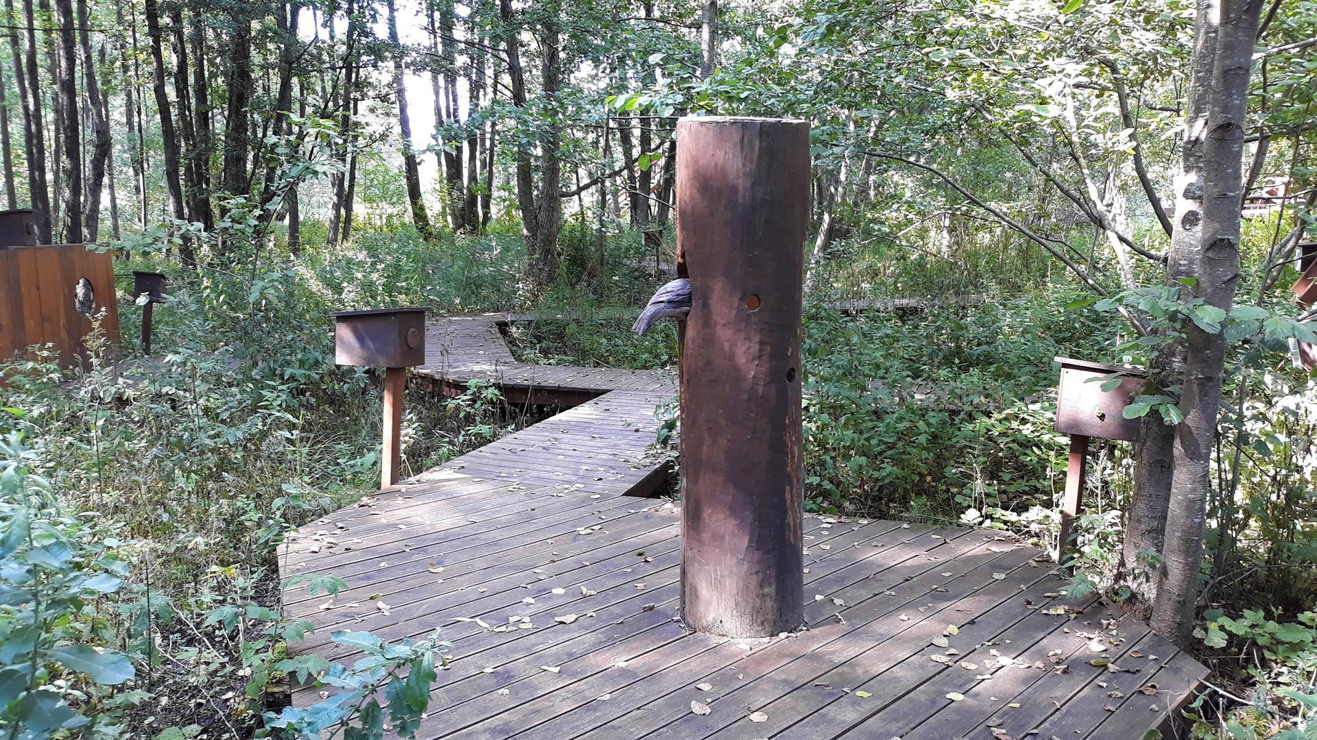 Suwalski Park Krajobrazowy - Turtul kładka